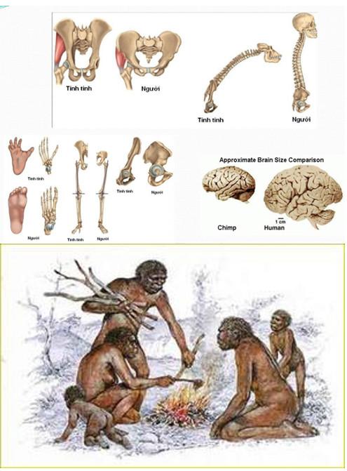 Đặc điểm phân biệt giữa người và động vật
