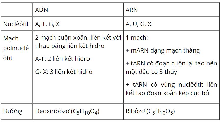 So sánh cấu trúc ADN và ARN