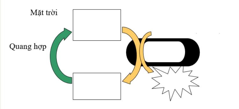 Hình 22.2 Mối quan hệ giữa quang hợp và hô hấp