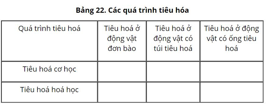 Bảng 22 Các quá trình tiêu hóa