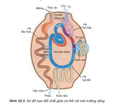 Hình 22.3 Sơ đồ trao đổi chất giữa cơ thể với môi trường.