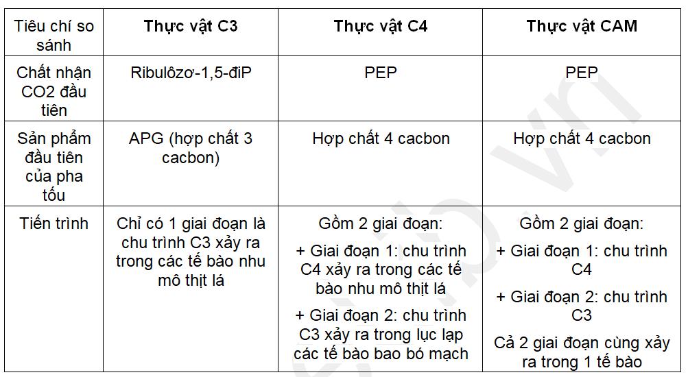 Sự khác nhau giữa quá trình quang hợp ở các nhóm thực vật C3, C4 và CAM
