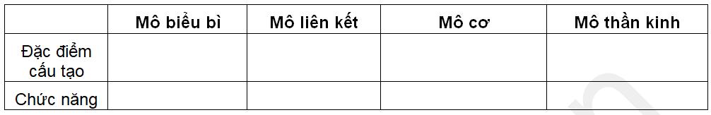 Phân biệt 4 loại mô
