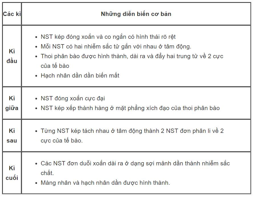 Những diễn biến cơ bản của NST trong quá trình nguyên phân.