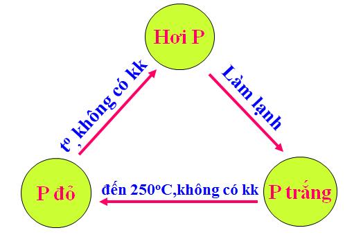 Hình 2: Sơ đồ chuyển hóa giữa Photpho trắng và Photpho đỏ