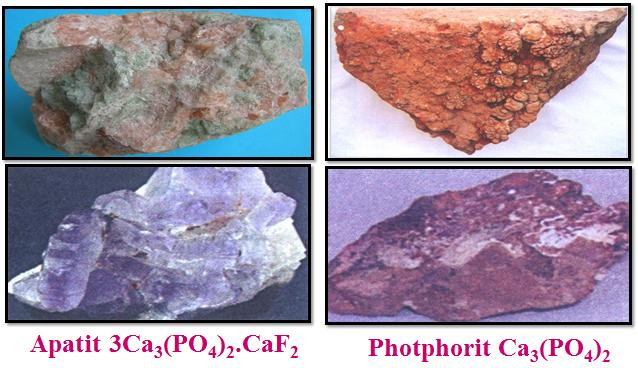 Hình 4: Hai khoáng vật chính của photpho