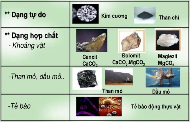 Hình 2: Các dạng tồn tại của Cacbon