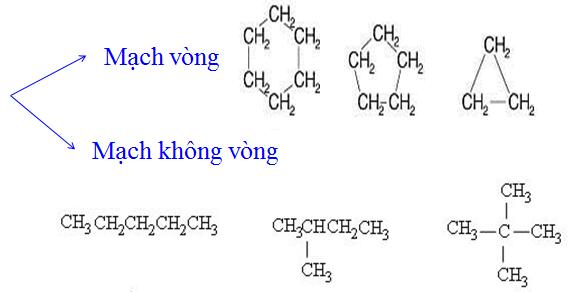 Hình 2: Phân loại dựa vào mạch cacbon