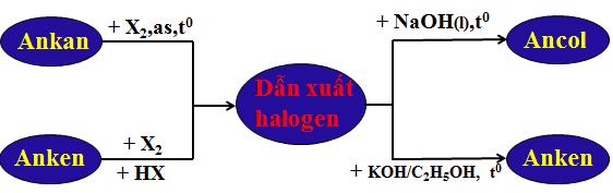 Hình 3: Sơ đồ tư duy bài Dẫn xuất halogen