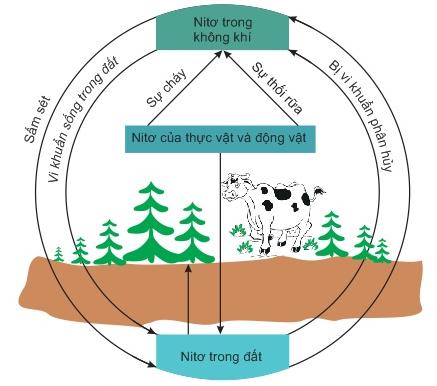 Hình 7: Chu trình của Nitơ trong tự nhiên