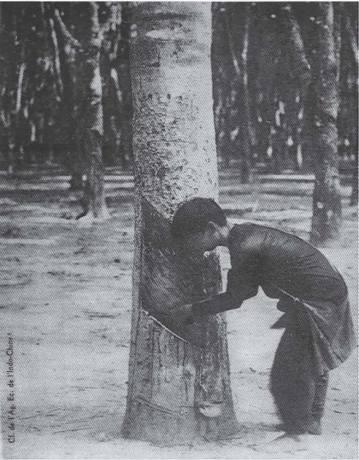 Công nhân cạo mủ cao su thời Pháp