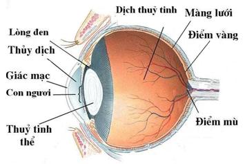 Cấu tạo quang học của mắt