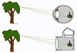 Mắt hoạt động như một máy ảnh