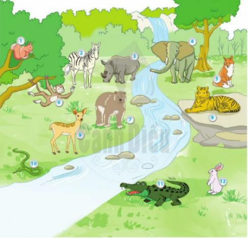 [Sách cánh diều] Soạn tiếng việt 2 tập 2 bài 25: Thế giới rừng xanh