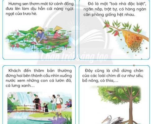 [Sách chân trời] Soạn tiếng việt 2 tập 2 bài: Ôn tập giữa học kì II (2)