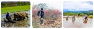 Kết hợp từ ở cột A với từ ở cột B để tạo từ ngữ chỉ công việc của người nông dân. Viết 4 - 5 câu kể về công việc của một người thân