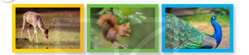 Nói tên các con vật ẩn trong tranh. Tìm từ ngữ chỉ hoạt động của các con vật sống trong rừng. Đặt một câu với từ ngữ em tìm được. Viết 3-5 câu giới thiệu về tranh (ảnh) mà em yêu thích