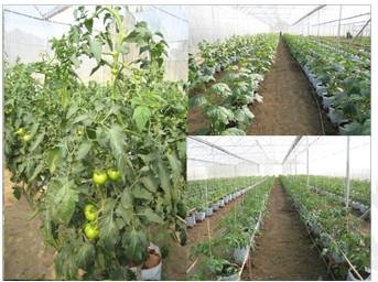 Cây trồng trong nhà kính
