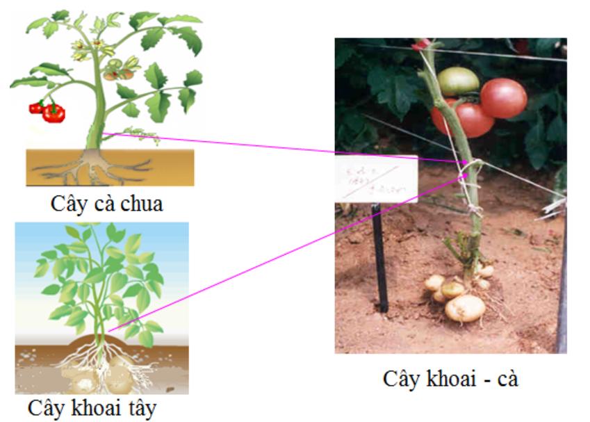 Hinh 3 Ví dụ về sản phẩm tăng năng suất cây trồng