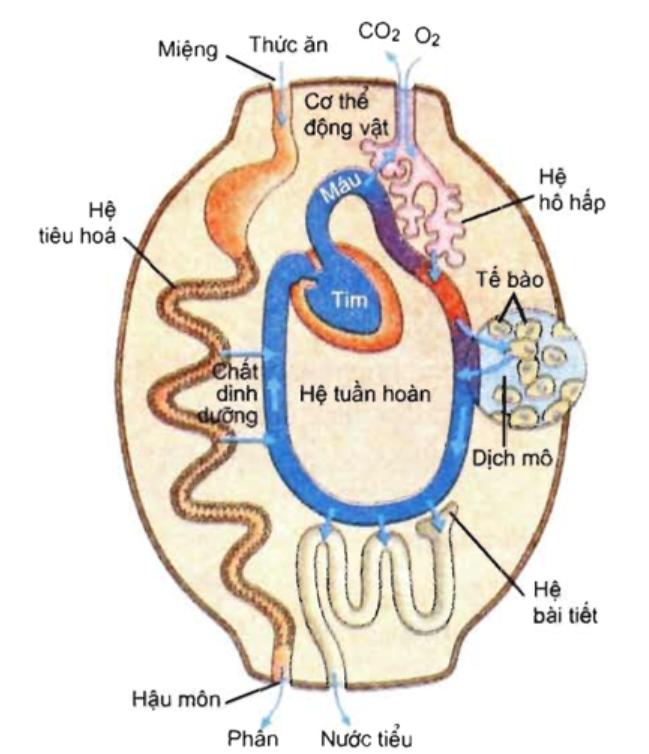 Sơ đồ cơ chế trao đổi chất giữa cơ thể với môi trường