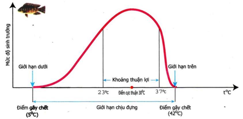 Giới hạn nhiệt độ cá rô phi ở Việt Nam