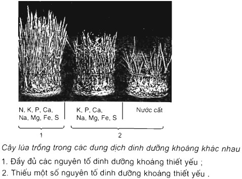 Vai trò của các nguyên tố khoáng