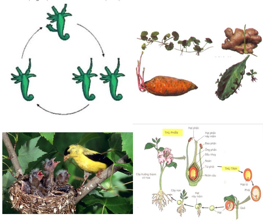 Sinh sản vô tính ở thực vật và sinh sản vô tính ở động vật