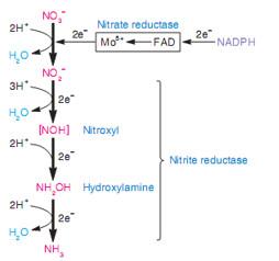 Quá trình khử nitrat