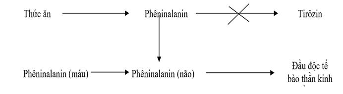 Cơ chế gây bệnh Pheninkêto niệu