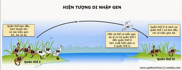 Hiện tượng di nhập gen