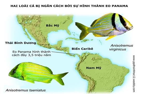 Ví dụ hình thành loài khác khu vực địa lí
