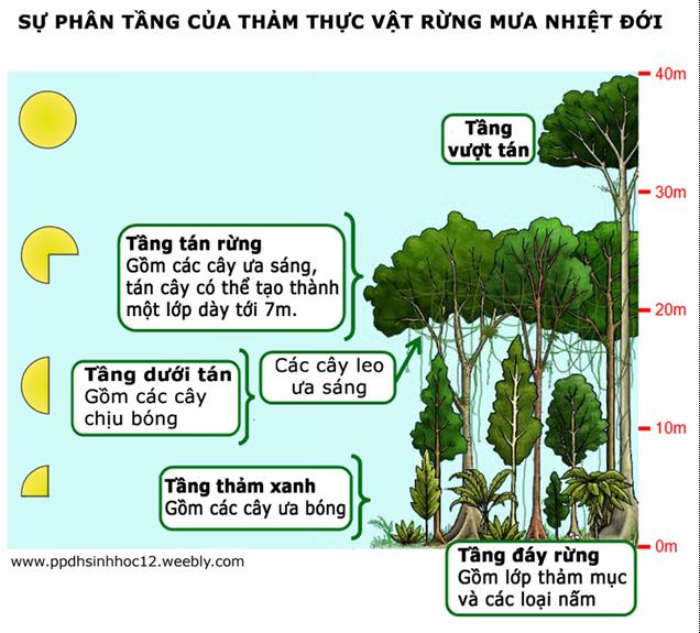 Sự phân tầng của thảm thực vật rừng nhiệt đới