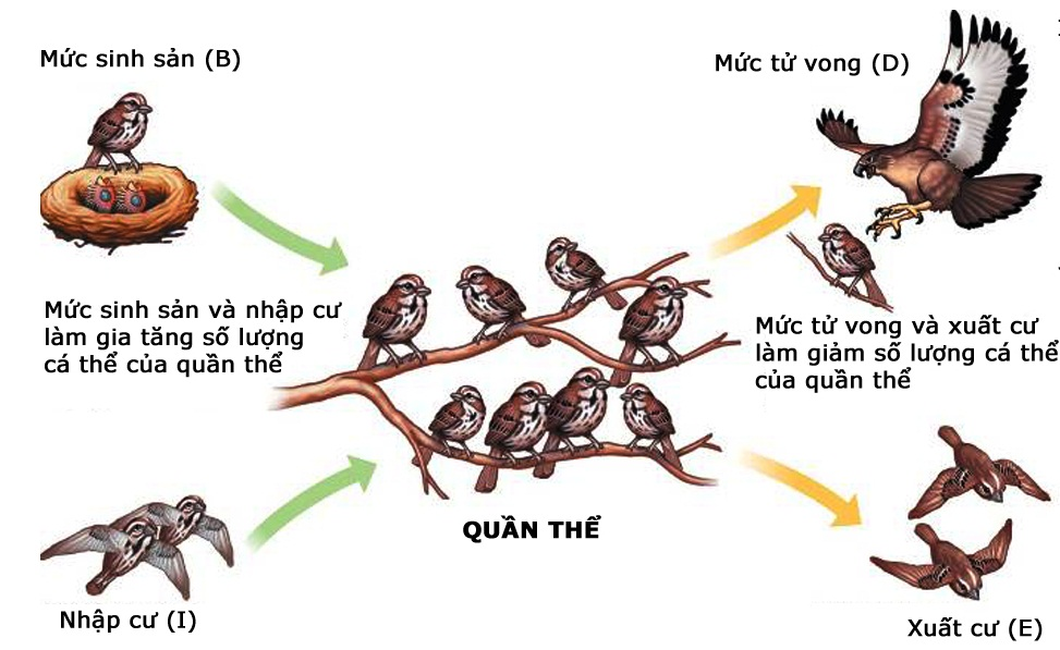 Các nhân tố ảnh hưởng đến kích thước của quần thể sinh vật