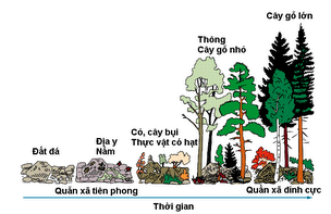 Diễn biến sinh thái hình thành rừng cây gỗ lớn
