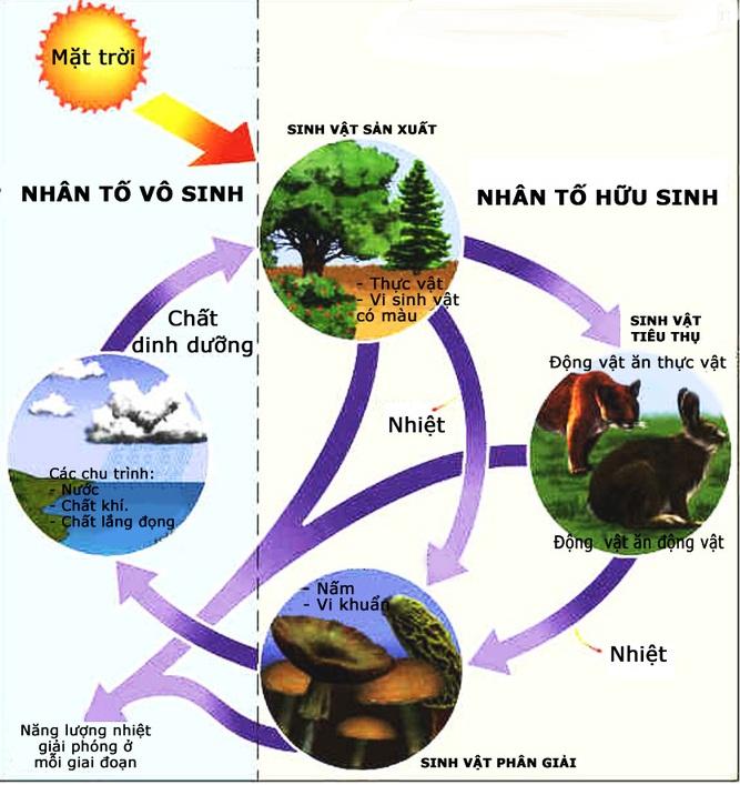 Thành phần cấu trúc của hệ sinh thái