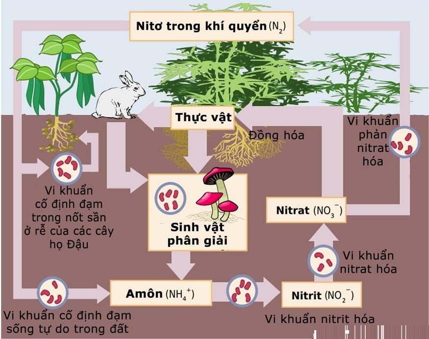 Chu trình nitơ