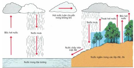 Chu trình nước trong tự nhiên
